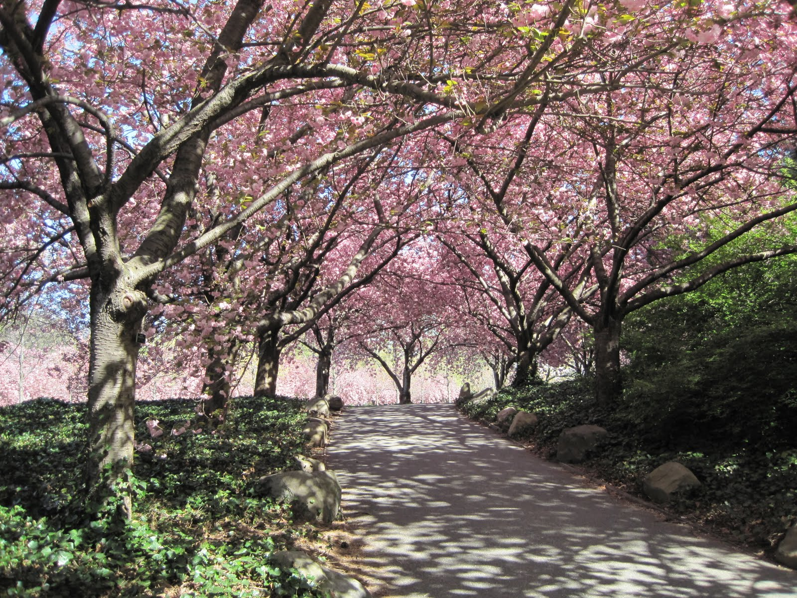 Brooklyn-Botanic-Garden-Background-HD-Wallpaper-Desktop
