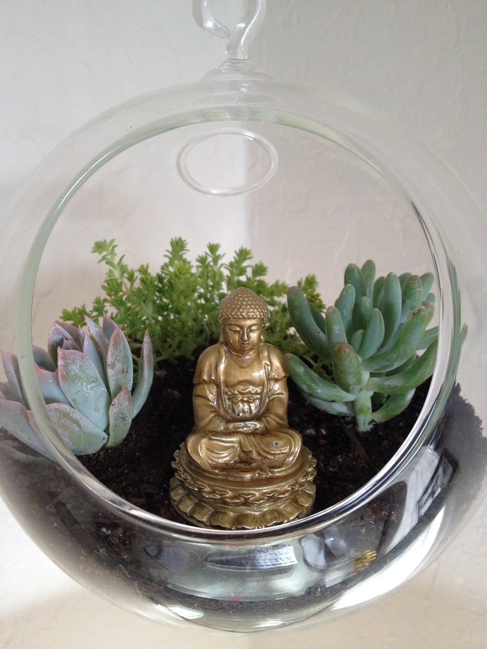 Cactus In Glass Bowl