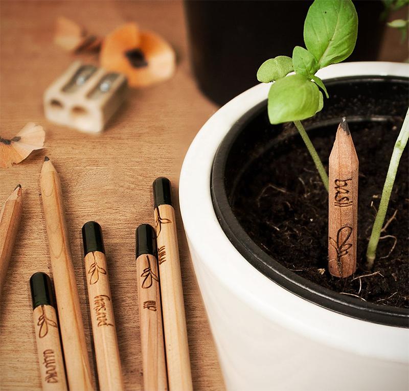 sprout pencil lápis tempero