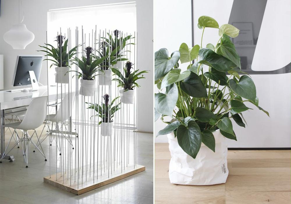 O que plantscaping e como inserir plantas em interiores for Plantas de interior lidl